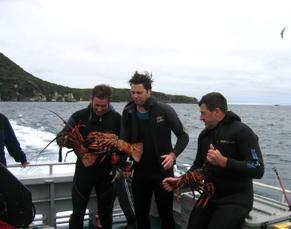 Crayfish caught by divers on a day out with Aurora Charters